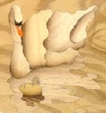 Example of result of browning by hot sand, on the swans, the reflect in the water